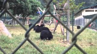 Moon and Sun Bears at the Vietnam Bear Rescue Center