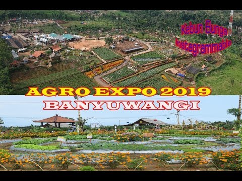 agro-expo-2019-negeri-seribu-bunga-banyuwangi-wisata-instagrammable-taman-suruh,pesona-langit-awan