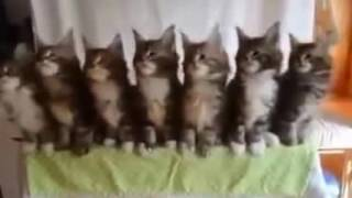 КОТЫ ТАНЦУЮТ ПОД МУЗЫКУ ДО СЛЕЗ / CATS DANCE TO THE SOUND OF MUSIC