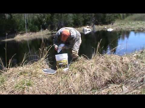 Catching Leach's Tutorial part 2...Setting and Checking the traps