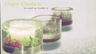 In Vitro Commercial - Plant Breeze