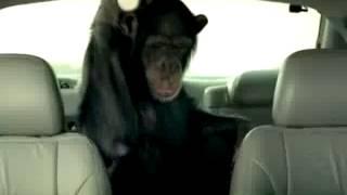 002 Macaco obrigatório nos carros! 2
