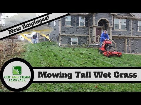 Mowing Tall Wet Grass | New Lawn Care Employee!