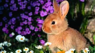 L'amore e gli animali - Immagini irresistibili