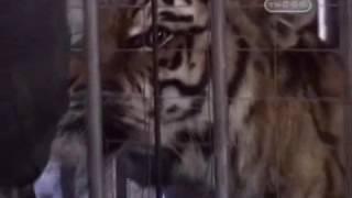 Превращение женщины в тигра - Человек в маске - Тайны великих магов - Разоблачение фокусов
