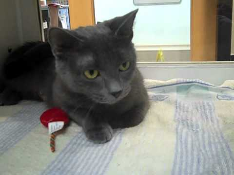 Adopt Kitty At The Connecticut Humane Society In Newington, CT