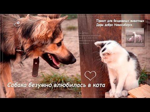 Собака безумно влюбилась в кота priyut dari dobro Novosibirsk