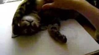 Кошка в коме