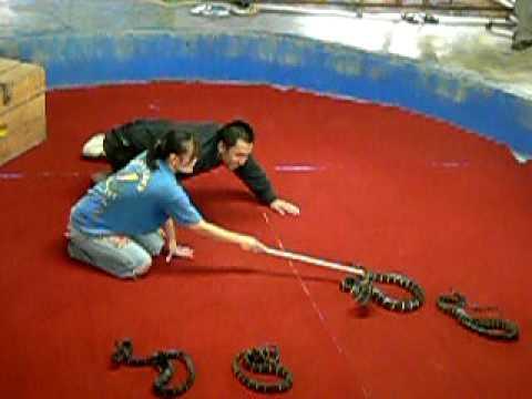 Man vs Snakes
