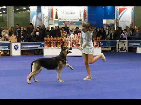 Танцы с собаками 'Россия - 2015'. Dog Dancing. Canine Freestyle.