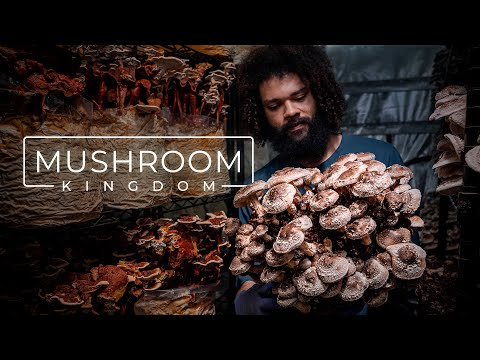 Cultivating Gourmet and Medicinal Mushrooms | PARAGRAPHIC