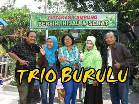Trio Burulu-kerjoan nyogok