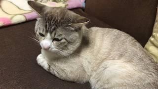 【そらルーティーン】ありがとう平成 ようこそ令和!ママ10連休に歓喜 そらちゃんは thumbnail