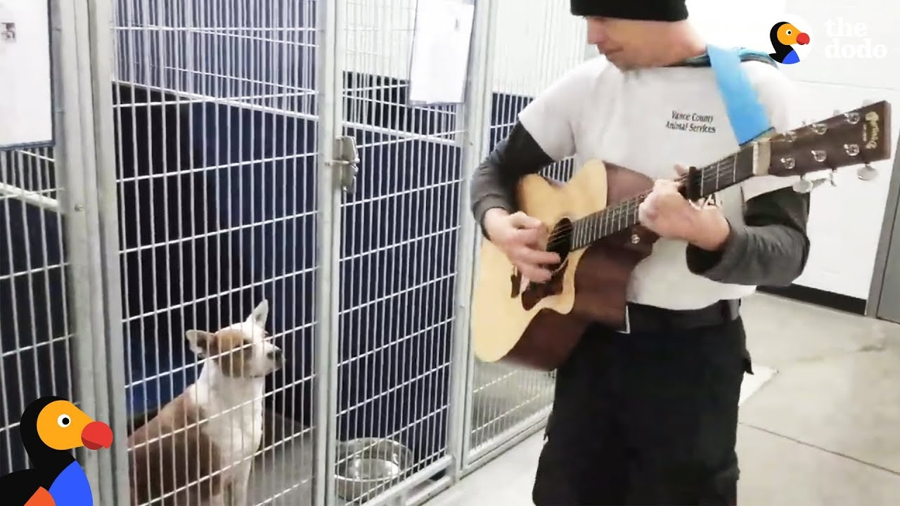 Man Sings To Shelter Dogs To Help Them Feel Better | The Dodo
