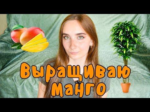 как сажать косточку манго в домашних условиях фото