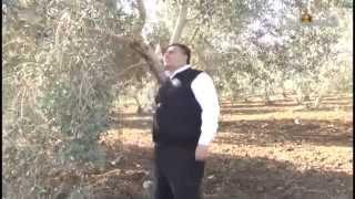 تأثير الإعلام والخطاب الديني المعاصر على الشباب الفلسطيني
