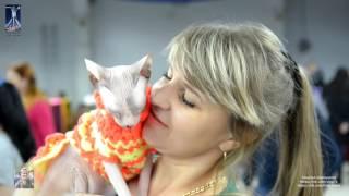 Международная выставка кошек г. Костанай 2016