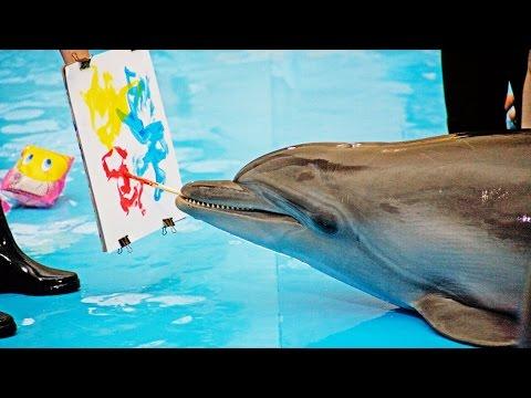 Вопрос: Какой длины язык у дельфина Какого размера язык у дельфина?