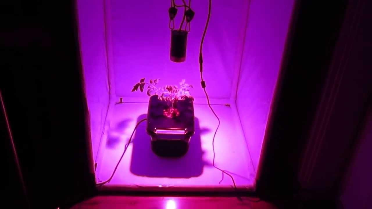 & Kessil H150: LED Grow Tent DWC w/ Canna Nutrients (9/19/13) - YouTube