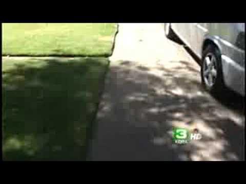 2 Pet Chihuahuas Attacked During Walk