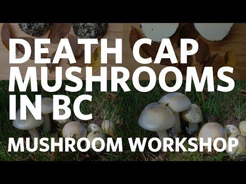 Death cap mushrooms in British Columbia - Paul Kroeger