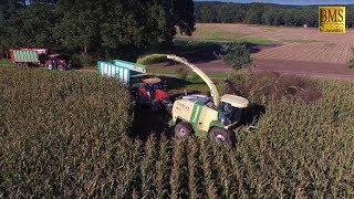 Maishäckseln 2017 - Häcksler Krone Big X 1100 -LU Hacke - Maisernte-farmer corn harvest Germany-cows