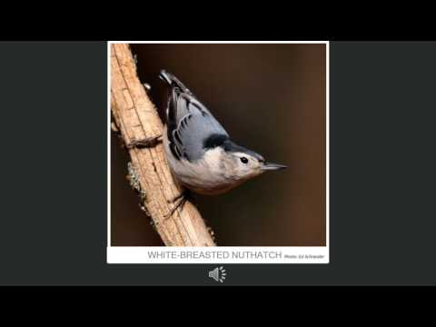 Common Backyard Birds in Guilford County, NC