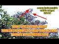 Trik Ampuh Atasi Burung Prenjak Yang Tidak Mau Turun  Mp3 - Mp4 Download