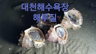 고둥과 봄철꽃게 해루질~ 204/164