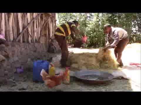 Moretnajiru  Effective  microorganismsEM Treatment  for Animal feed