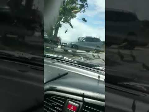 MUST SEE!!!...LOCUST INFESTING VARIOUS PARTS OF TRINIDAD AND TOBAGO.(VIDEO 2)