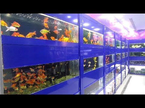 Freshwater Aquarium fish selling At Riyadh pet shop -(marine fish tank ) Riyadh birds market