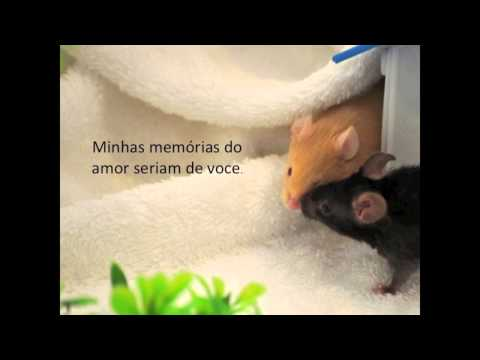 Perhaps Love - Placido Domingo & John Denver - with Portuguese subtitles.