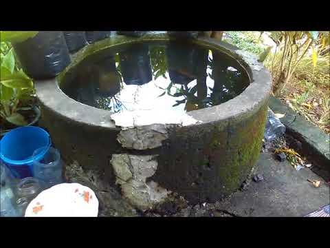 Cara Paling Mudah Budidaya Kutu Air Itu Dengan Daun Ketapang By Ahmad Nur Hadi
