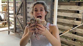 SAVED NEWBORN ANIMALS
