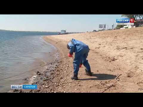 Пляжи Саратова готовятся к купальному сезону