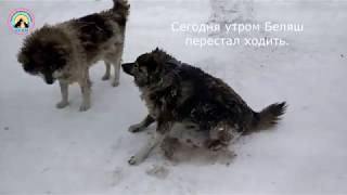 Спасти жизнь бездомной собаке любой ценой Сибиряк мы не бросим тебя! animal shelter helps dogs