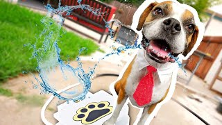 My Dog Reacts To Water Fountain! (Funny Worst Dog Toy)