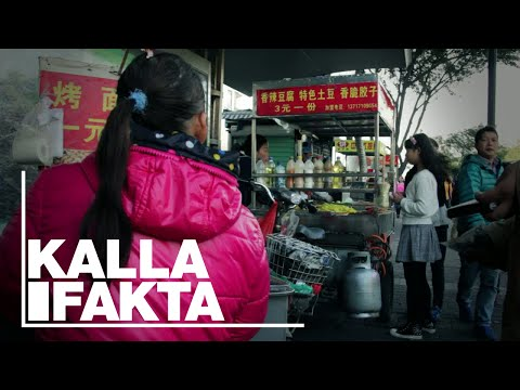 Kalla Fakta: Bakom fabriksgrindarna (Behind the Factory Gates | With English subtitles) - TV4