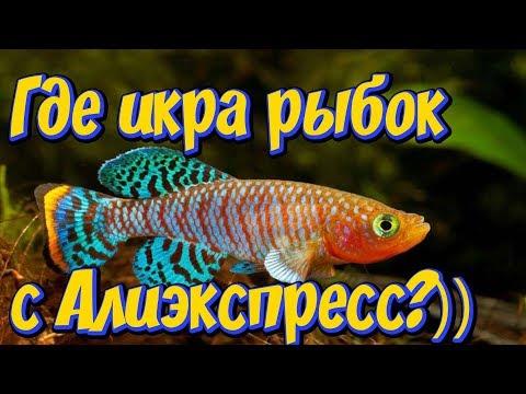 По Вашим просьбам еще пару слов о живых аквариумных рыбках с Алиэкспресс! Продолжаем разговаривать п