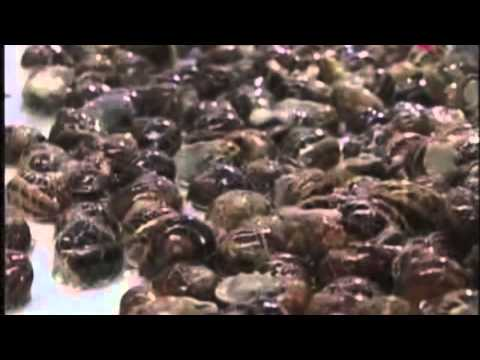 Snail Farming - Creat your own snail farm