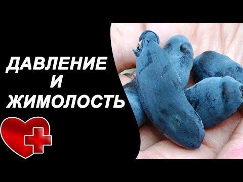 Как понизить давление с помощью жимолости голубой, растение при гипертонии