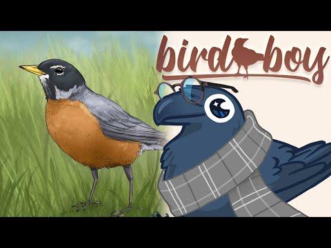 Bird Boy ▸ Robin ( chill beat to watch birds to )