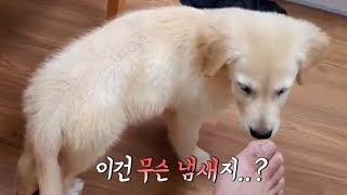 콩콩이가 태어나 처음 내 발냄새를 맡더니...강아지 놀아주기 브이로그~!