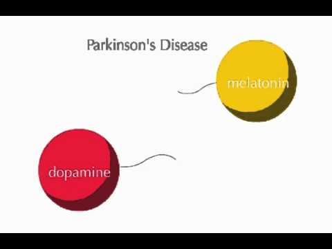 The Relationship between Dopamine and Melatonin