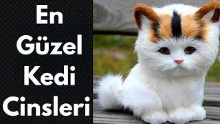 En Tatlı / En Güzel / En Popüler Kedi Cinsleri - Irkları