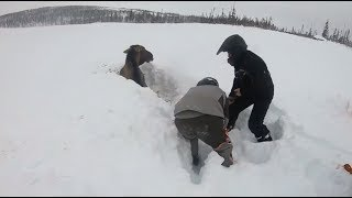 Snowmobilers Rescue Moose Stuck In Snow Youtube