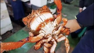 Nhật Bản mon ăn đường phố - Cua huỳnh đế Okinawa Hải sản