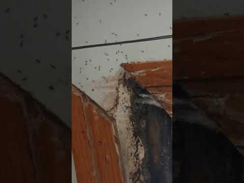 Plaga de hormigas en los juzgados de Vilagarcía