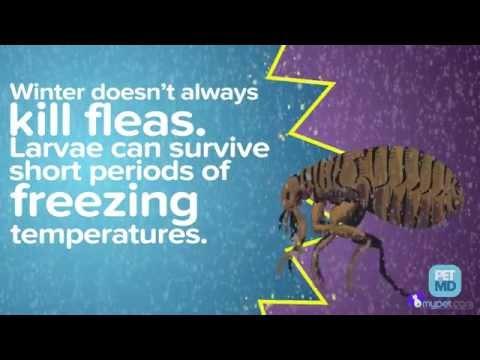 Bizarre Flea & Tick Facts